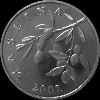 20 лип 2007 Хорватия. Маслины.