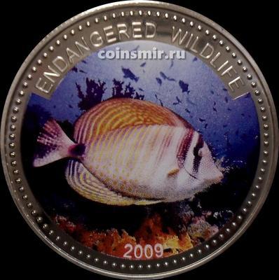 1 доллар 2009 Палау. Зебрасома парусная. Исчезающие виды.