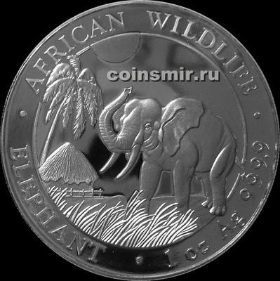 100 шиллингов 2017 Сомали. Слон.