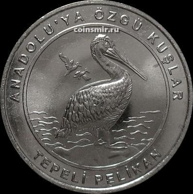 1 куруш 2018 Турция. Птицы Анатолии — Кудрявый пеликан.