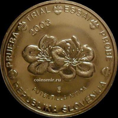 20 евроцентов 2003 Словения. Европроба. Specimen. Лапчатка блестящая.