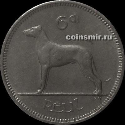 6 пенсов 1961 Ирландия. Собака. (в наличии 1962 год)
