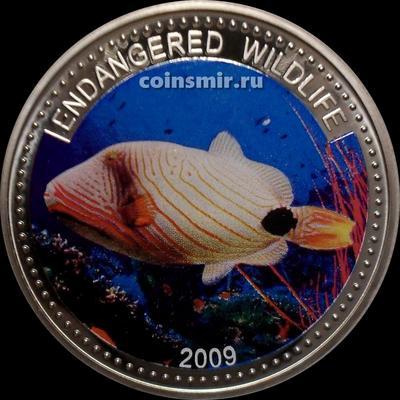 1 доллар 2009 Палау. Оранжевый спироног. Исчезающие виды.