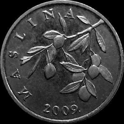 20 лип 2009 Хорватия. Маслины.