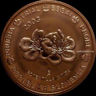 2 евроцента 2003 Словения. Европроба. Specimen. Лапчатка блестящая.